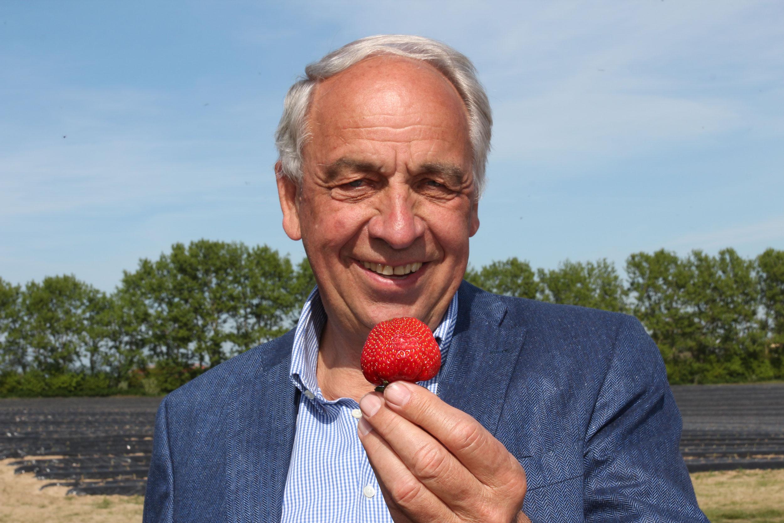 Glantz Erdbeeren EDEKA Woytke in Hamburg