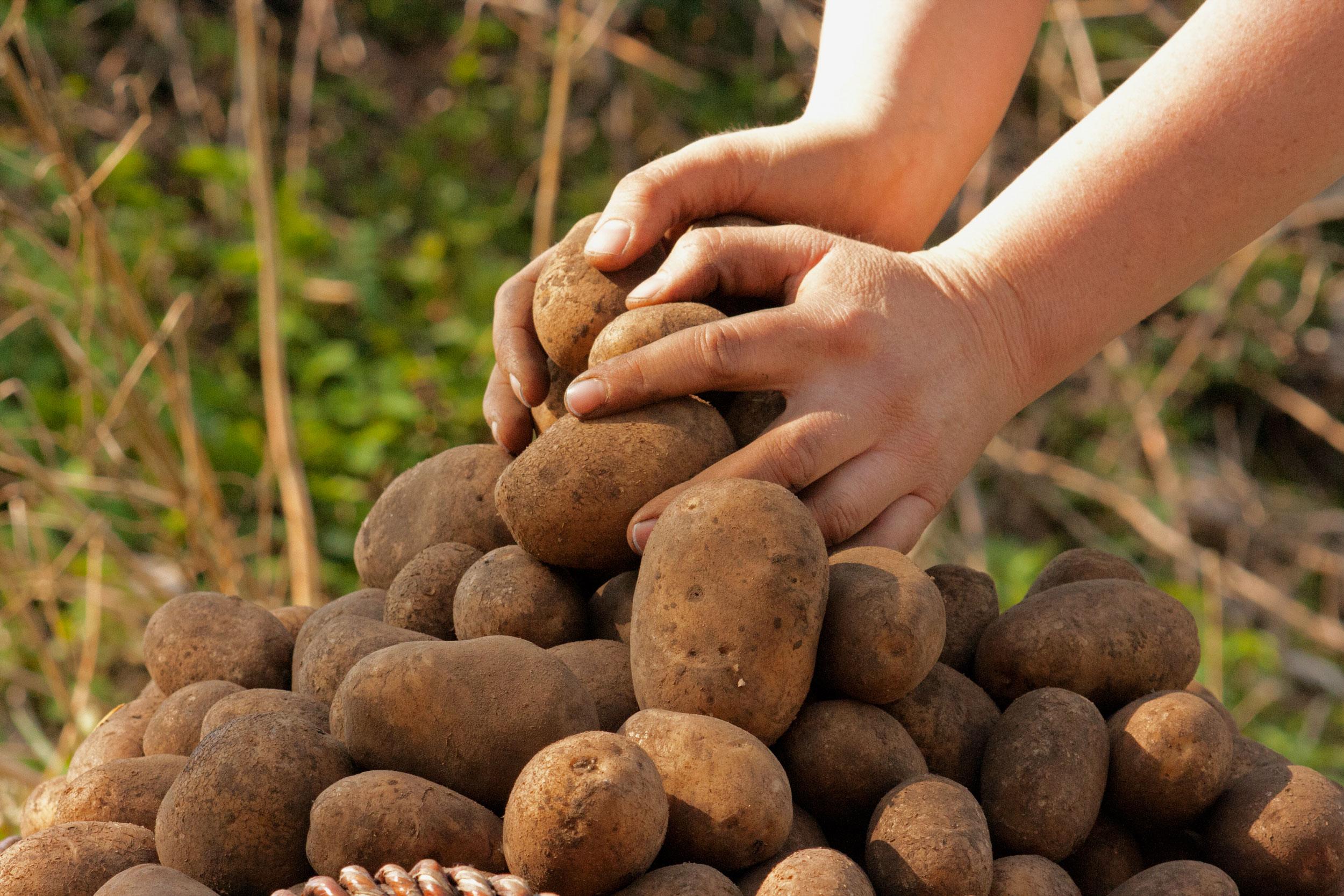 Gut Wulksfelde Kartoffeln EDEKA Woytke in Hamburg
